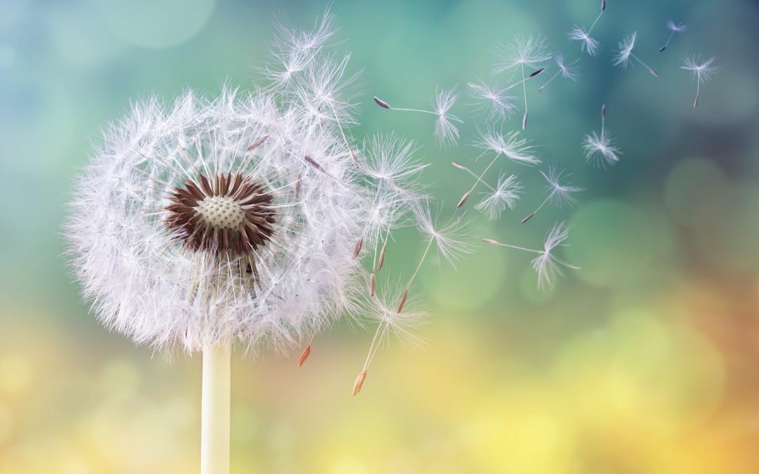 Czy alergik może korzystać z pralni chemicznej?